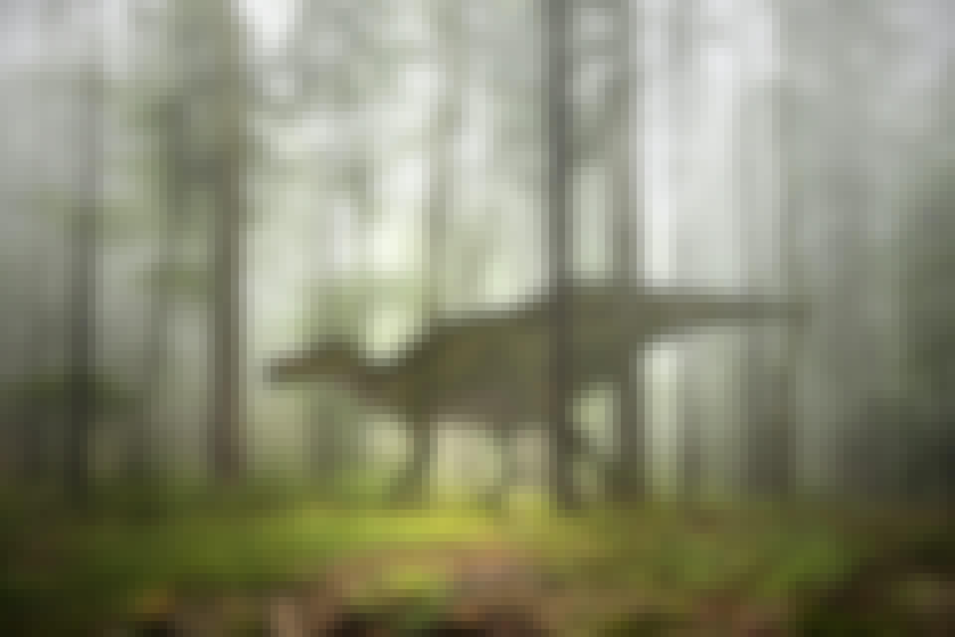 Maailman suurimmat eläimet