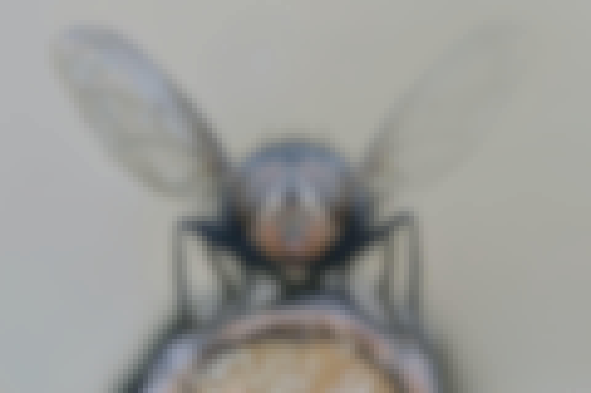 Flue med udslåede vinger