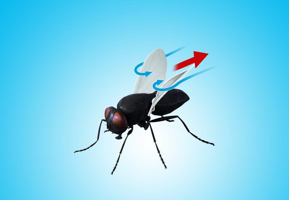 Fluens vinger bevæger sig ned langs kroppen
