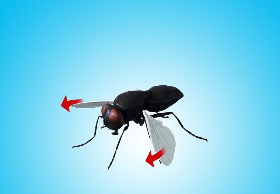 Fluens vinger vender tilbage til start