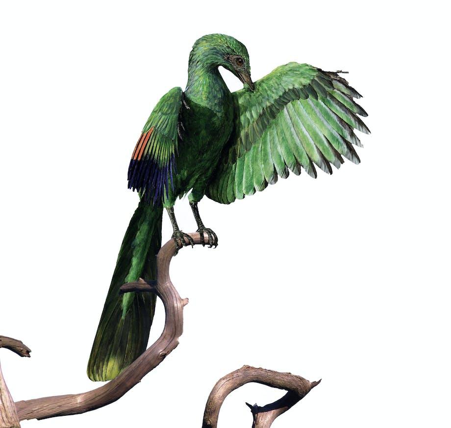 Archaeopteryx, 's werelds eerste vogel