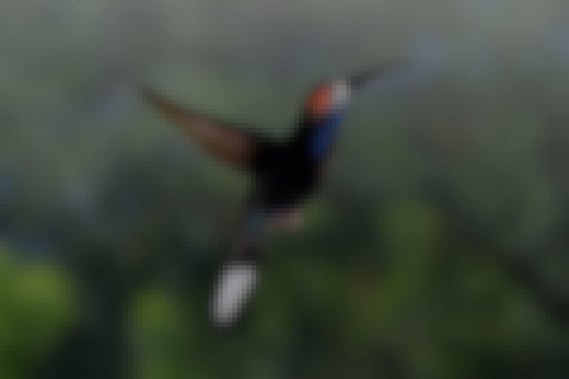 Kolibrins hjärna