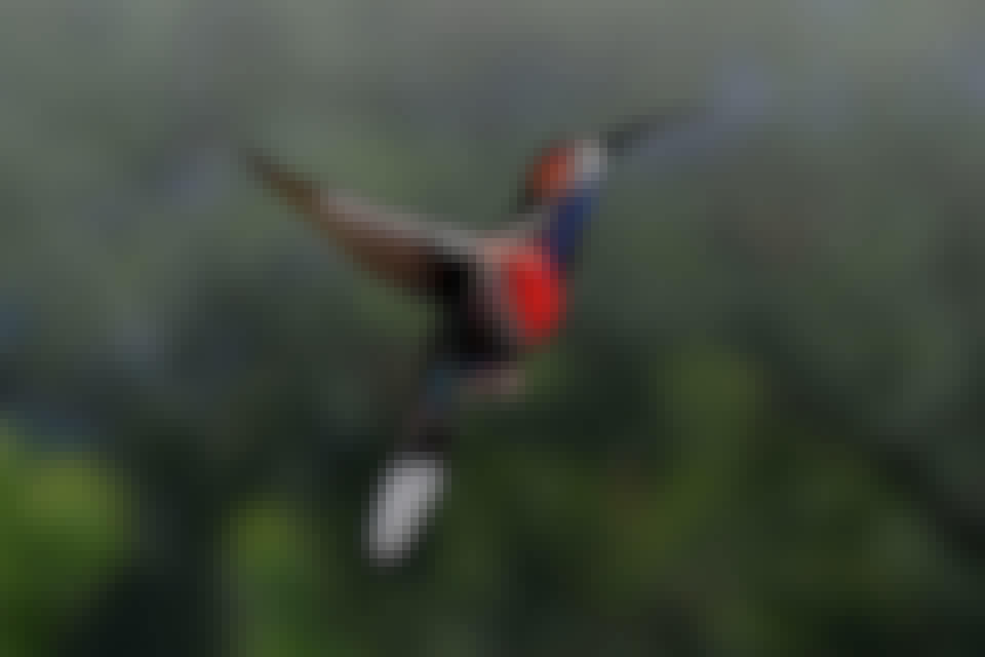 Kolibrins bröstmuskler