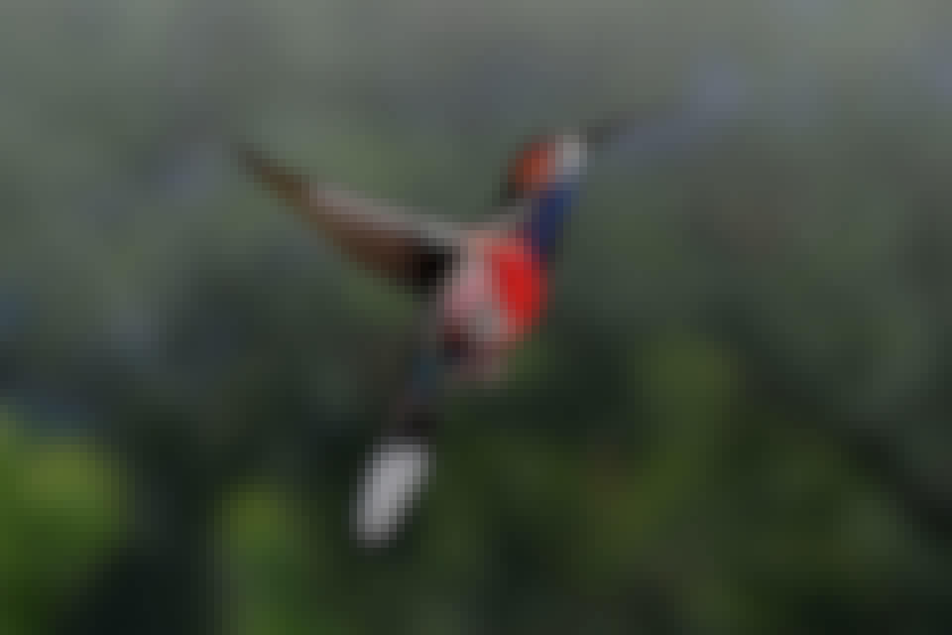 Kolibrien jalat