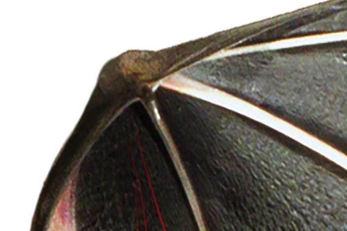 Fladdermusens handled