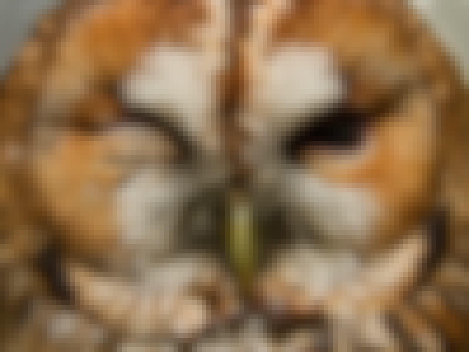 Ugle sover med et øje åbent