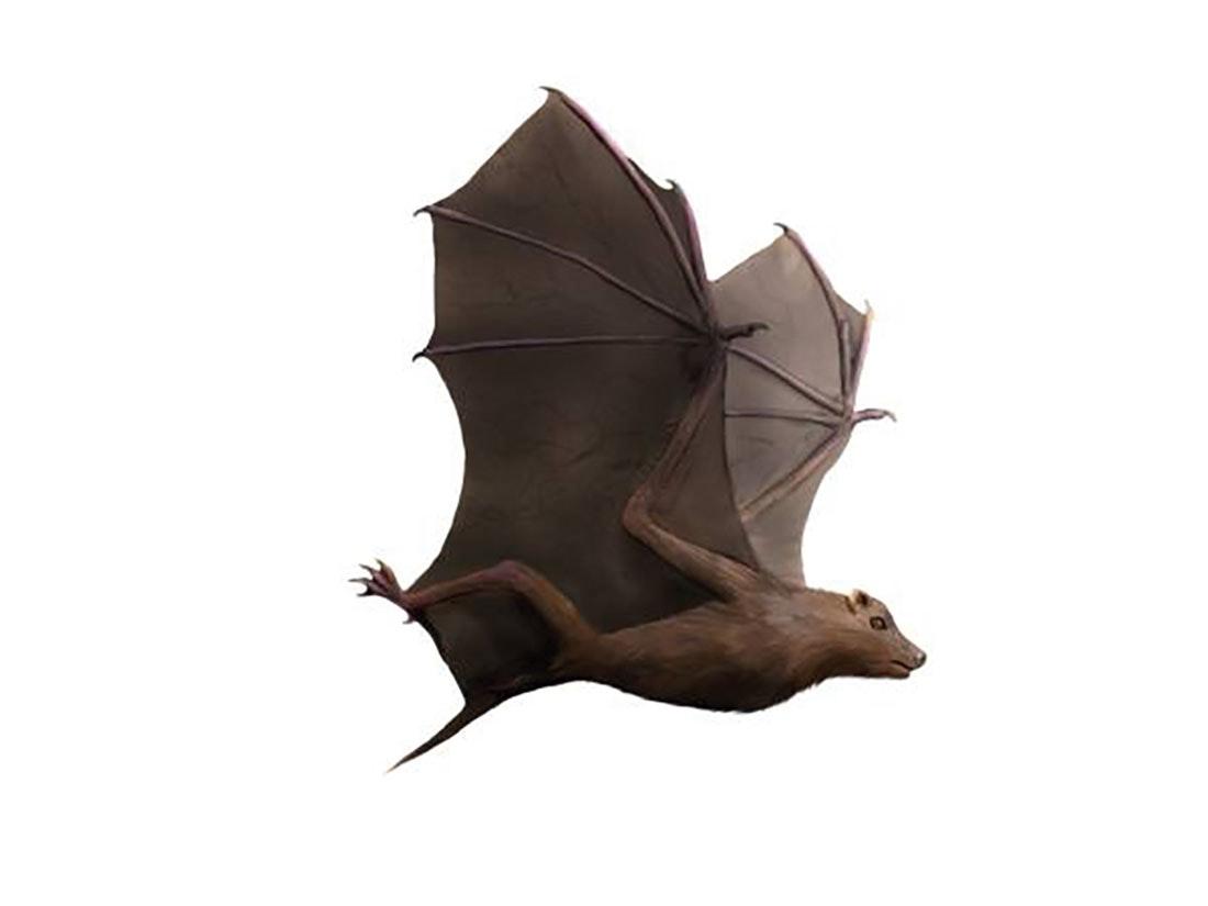 Världens första fladdermus
