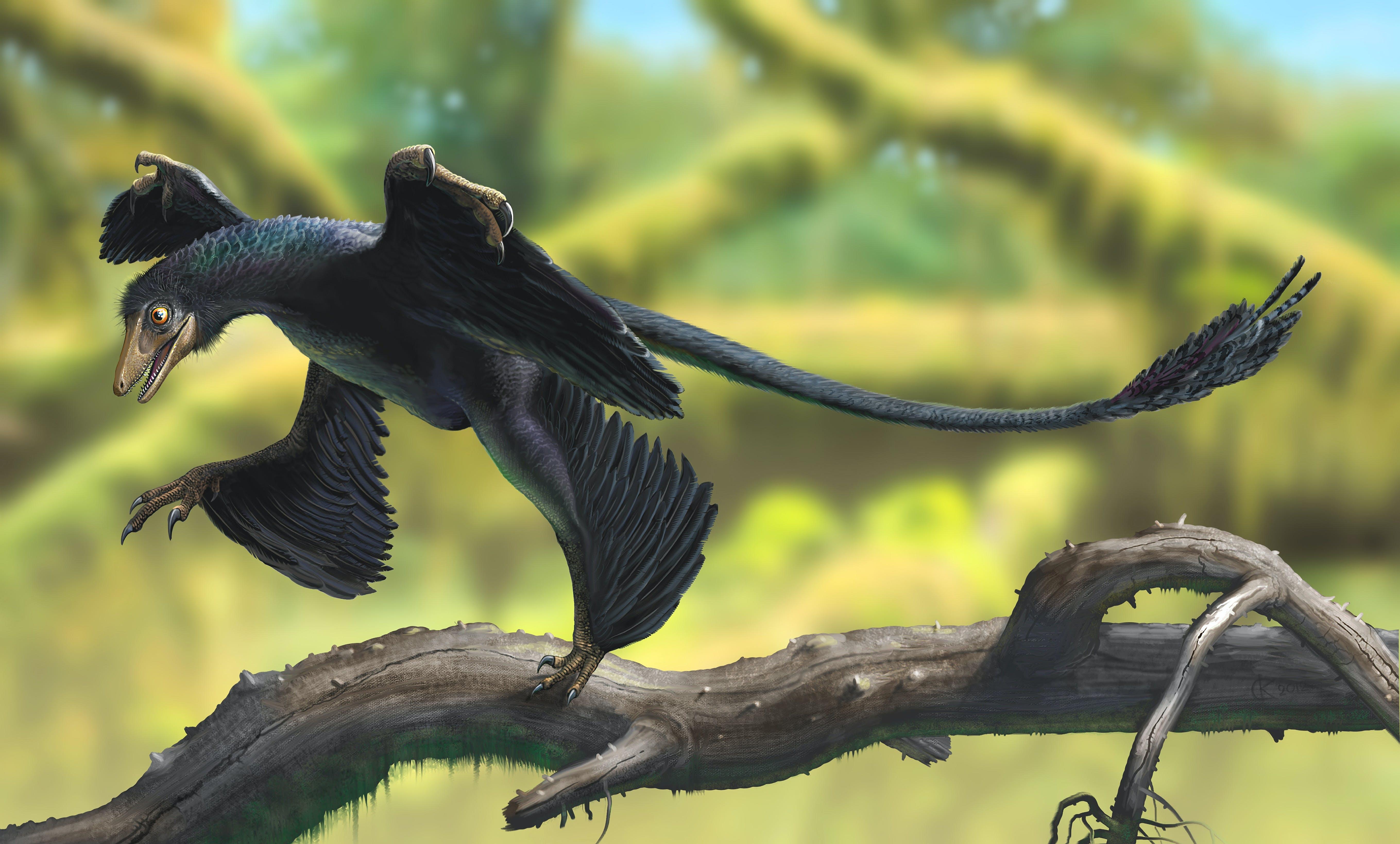 Mircroraptor
