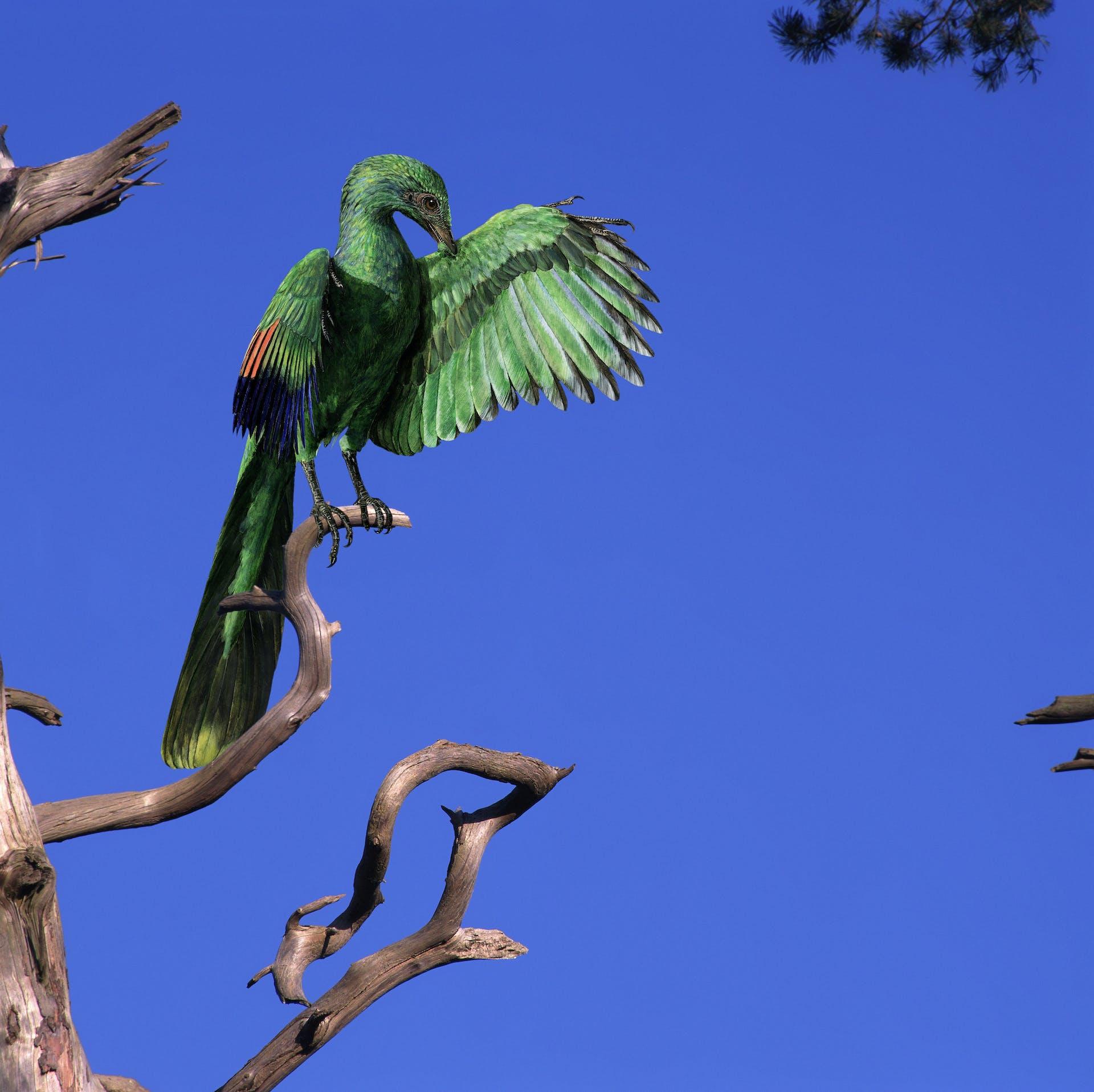 Archaeopteryx, världens första fågel