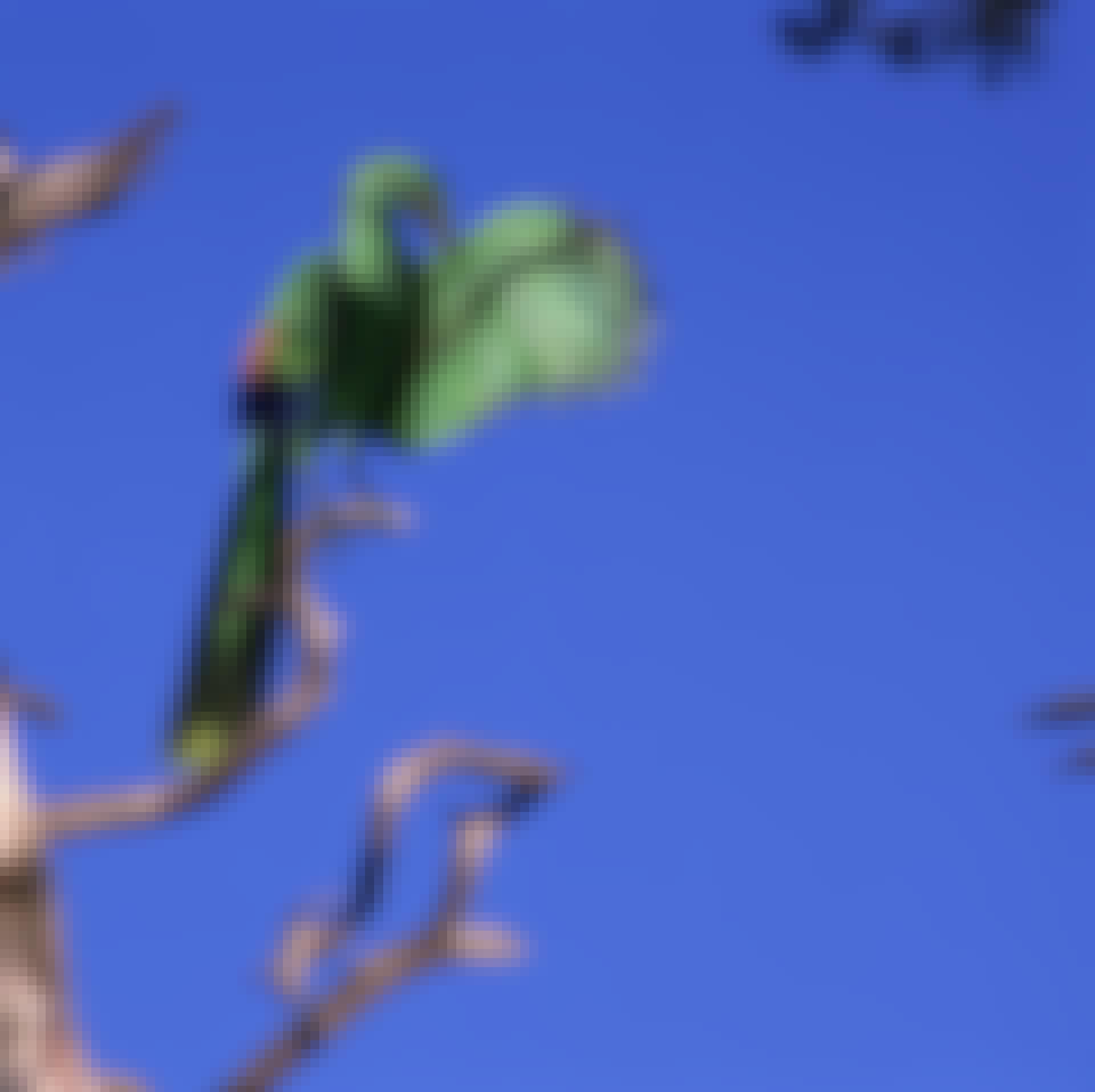 Archaeopteryx, verdens første fugl