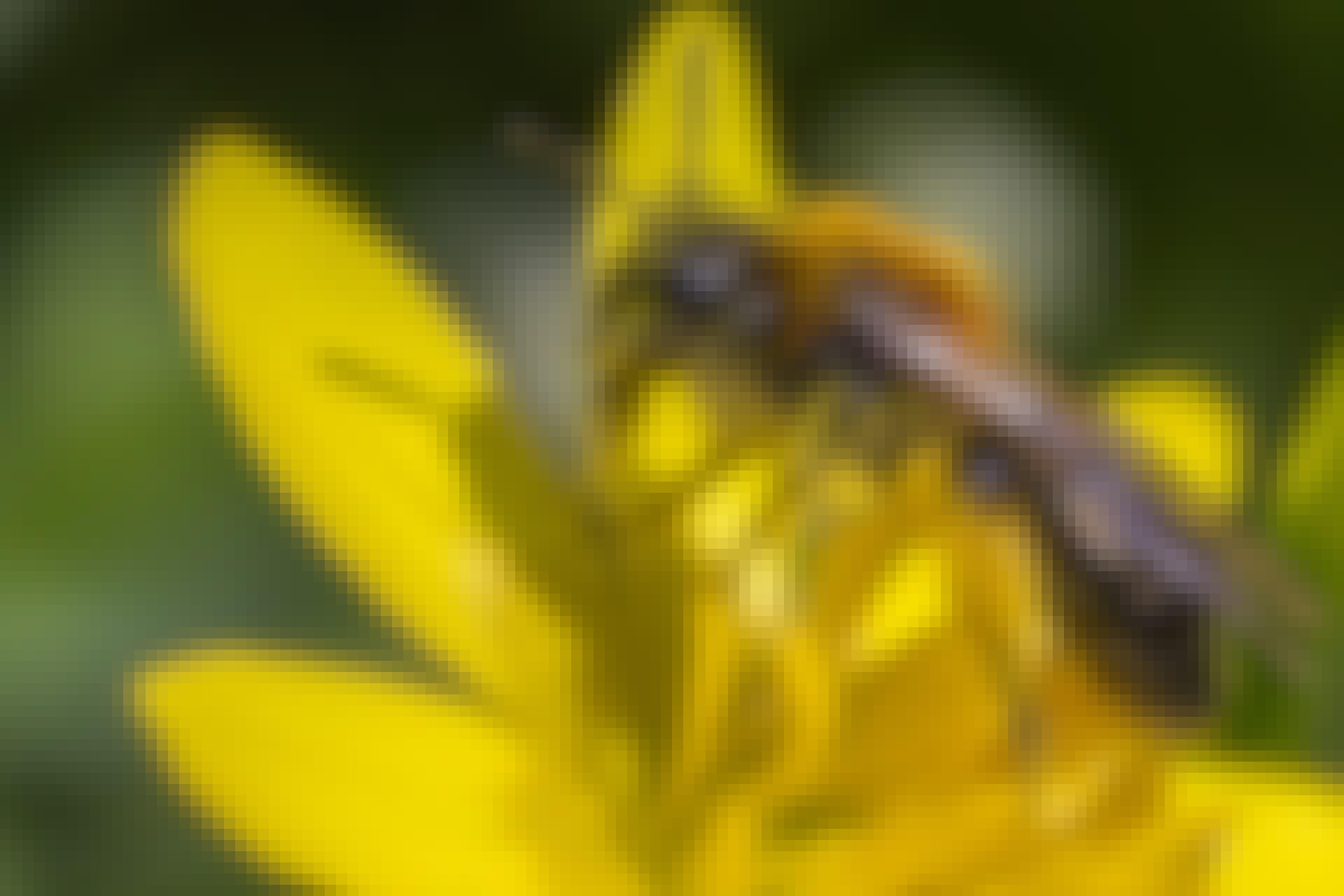 Bier utviklede seg parallelt med blomster