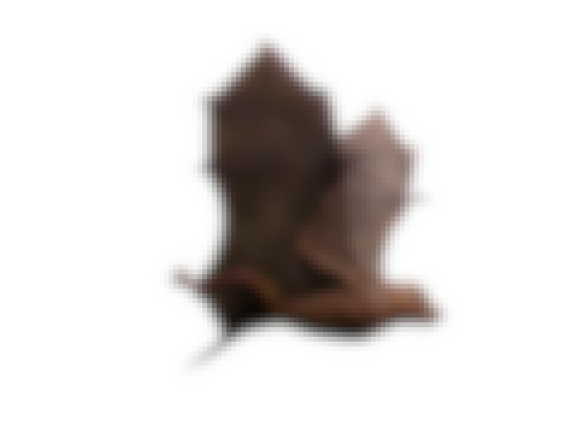 Onychonycteris finneryi, verdens første flaggermus
