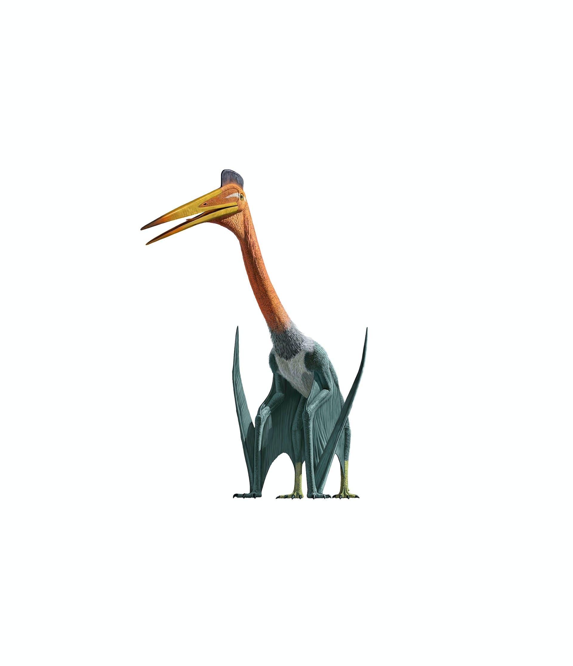 Quetzalcoatlus northropi, världshistoriens största flygande djur