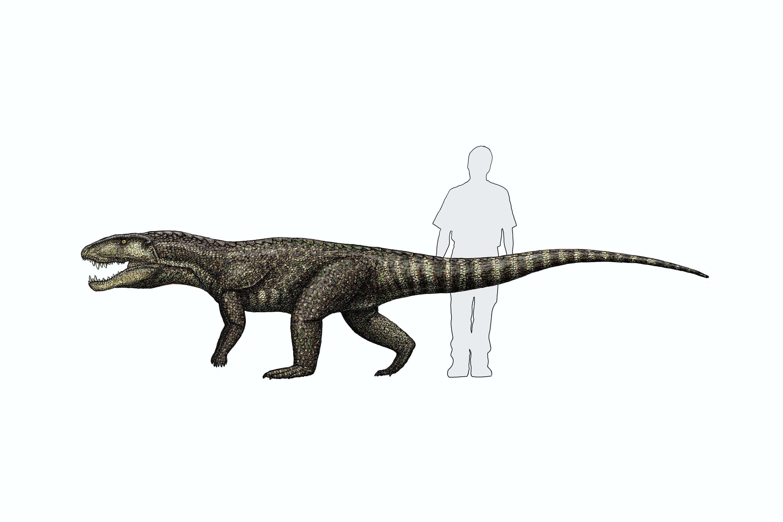 Krokodiller