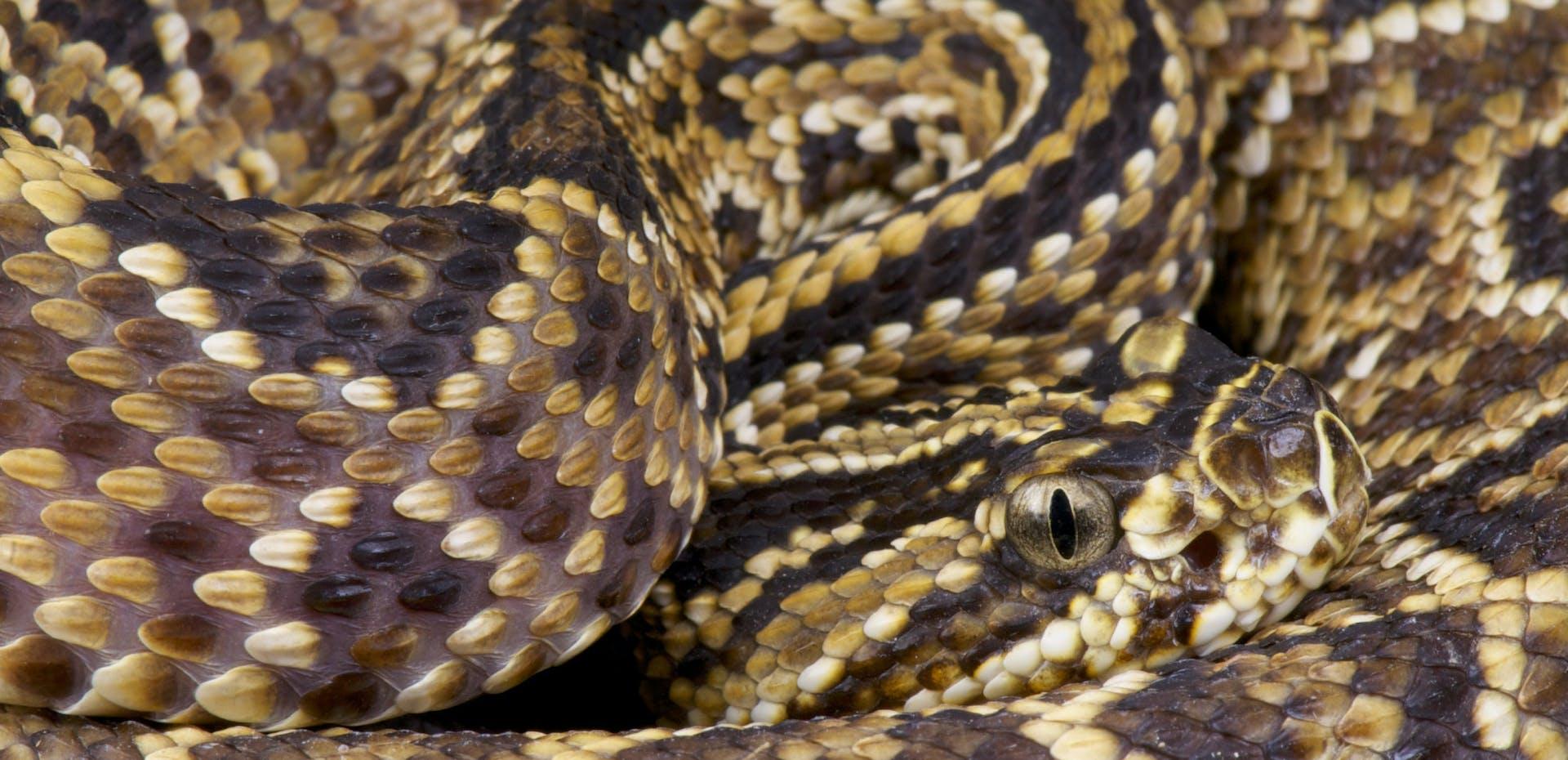 slanger