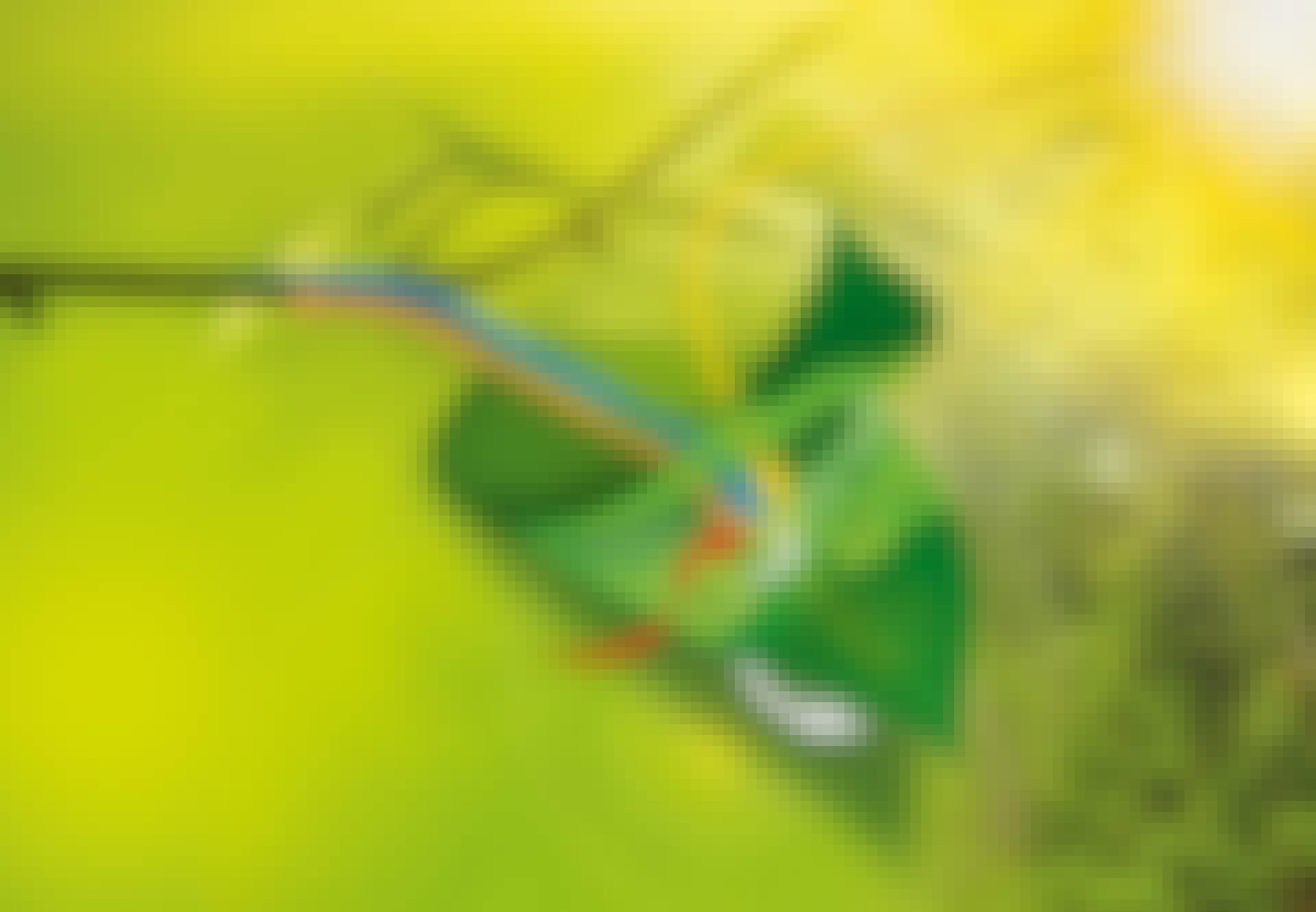 Sådan virker fotosyntese