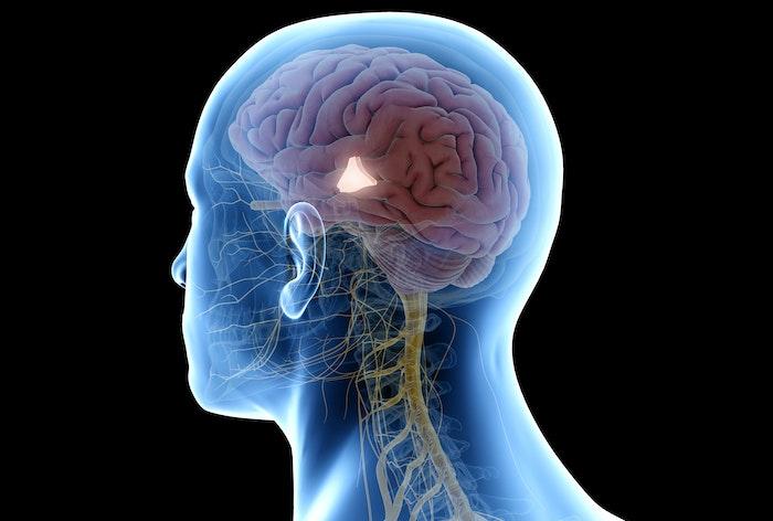Hypothalamus er kroppens termostat