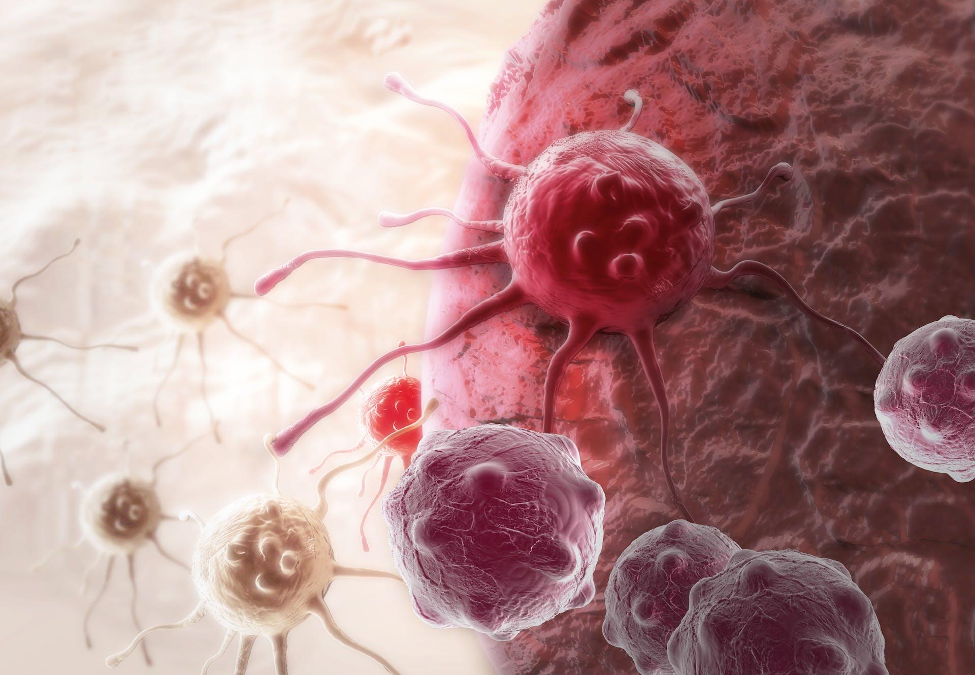 Kræft opstår ved at celler deler sig unaturligt og muterer.