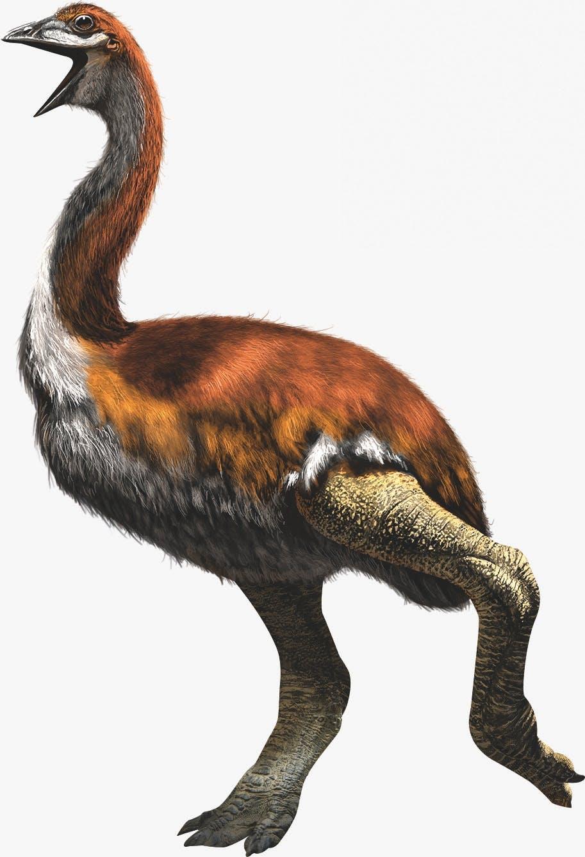 De grootste vogel ooit is de olifantsvogel