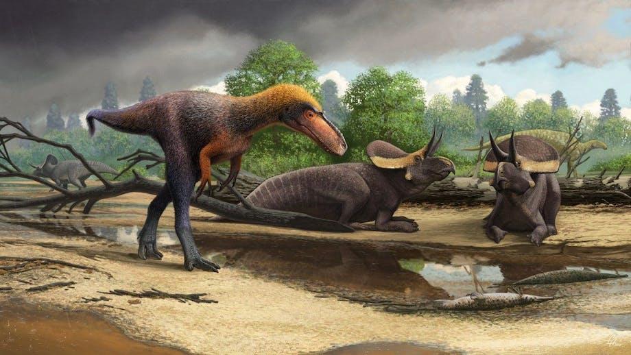 Tyrannosauren Suskityrannus blandt Triceratops
