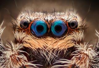 Edderkoppeøjne helt tæt på