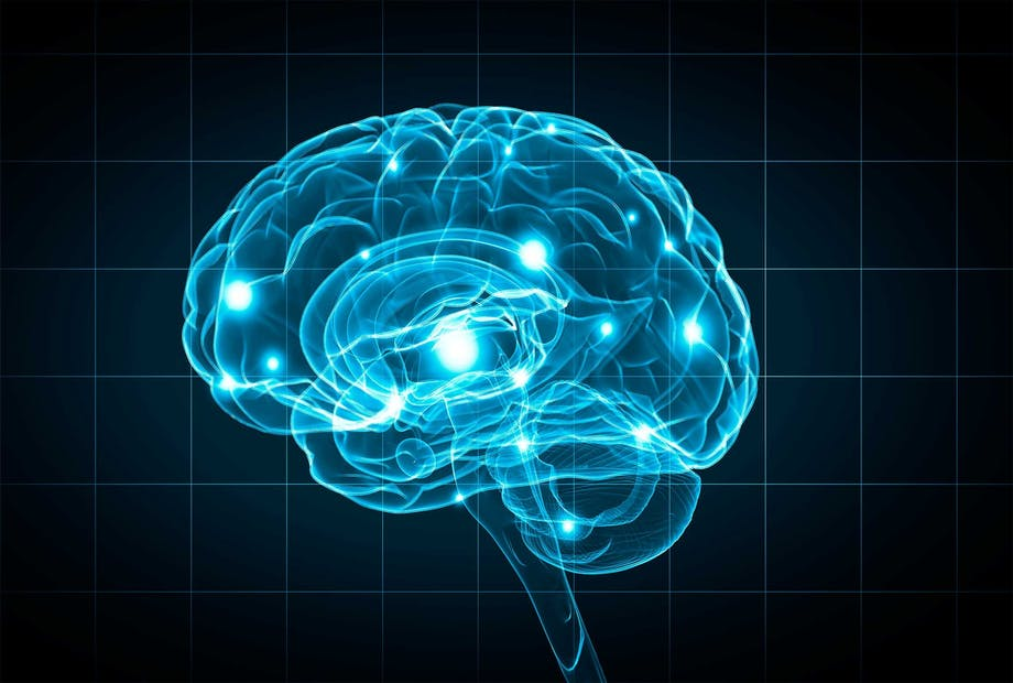 De functies van de hersenen