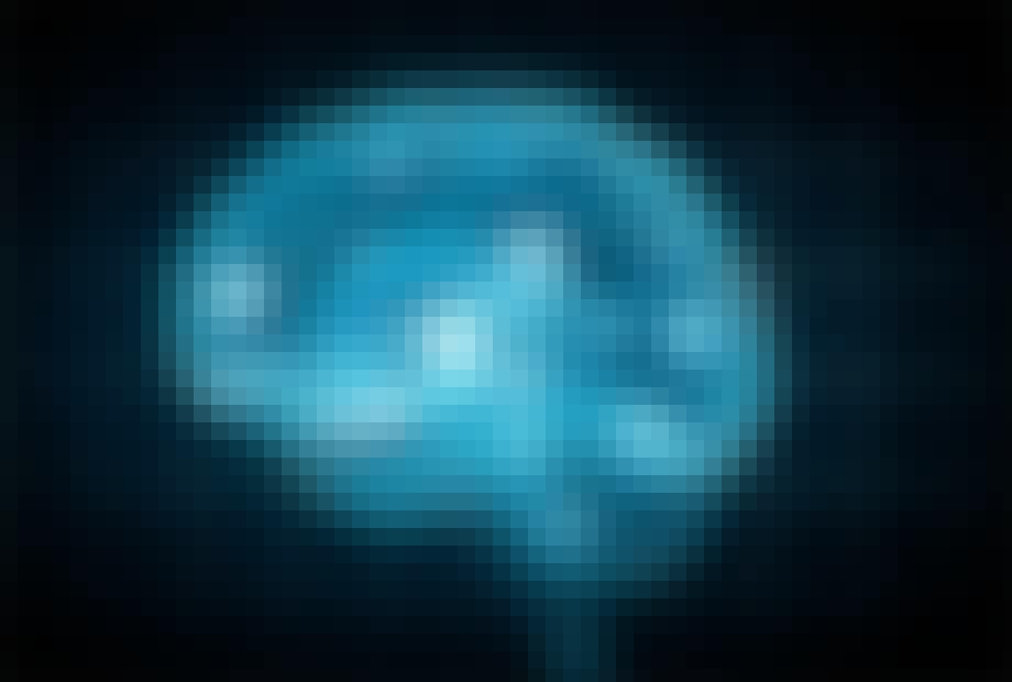 hjernens funksjoner