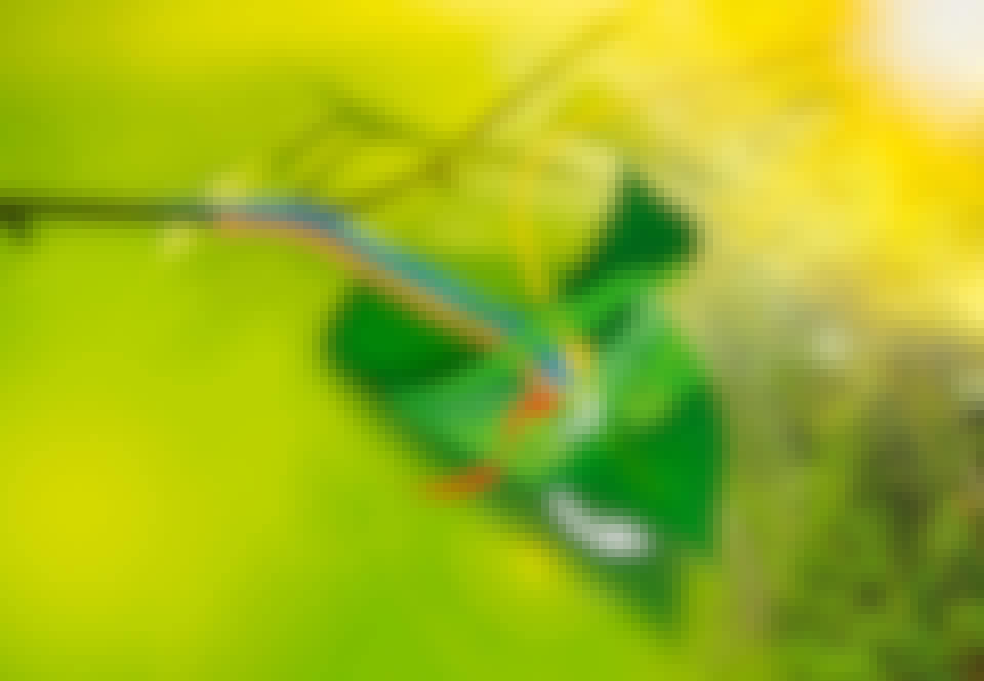 Näin fotosynteesi tapahtuu