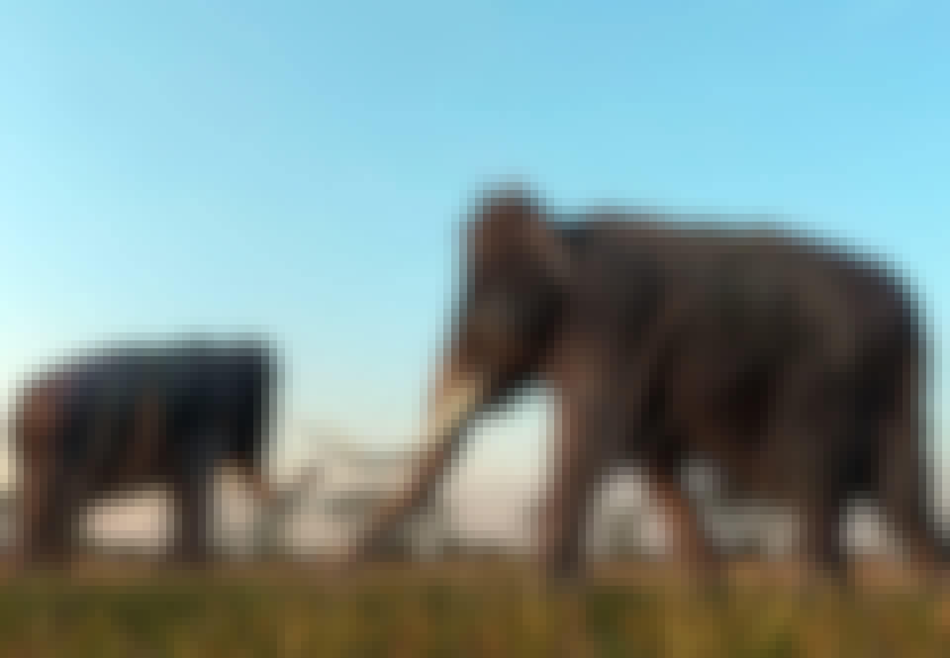 Mammuter på sletten
