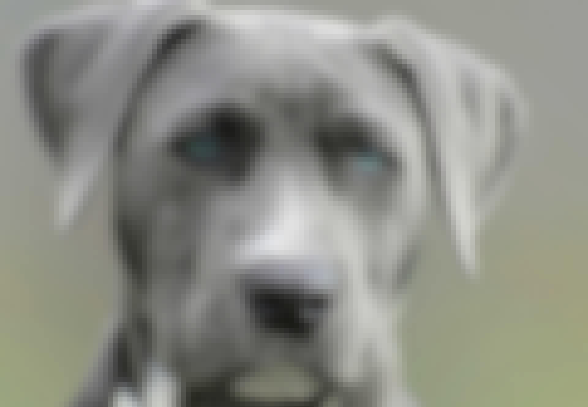 Äkykkäimmät-koirat-tyhmmimät-koirat