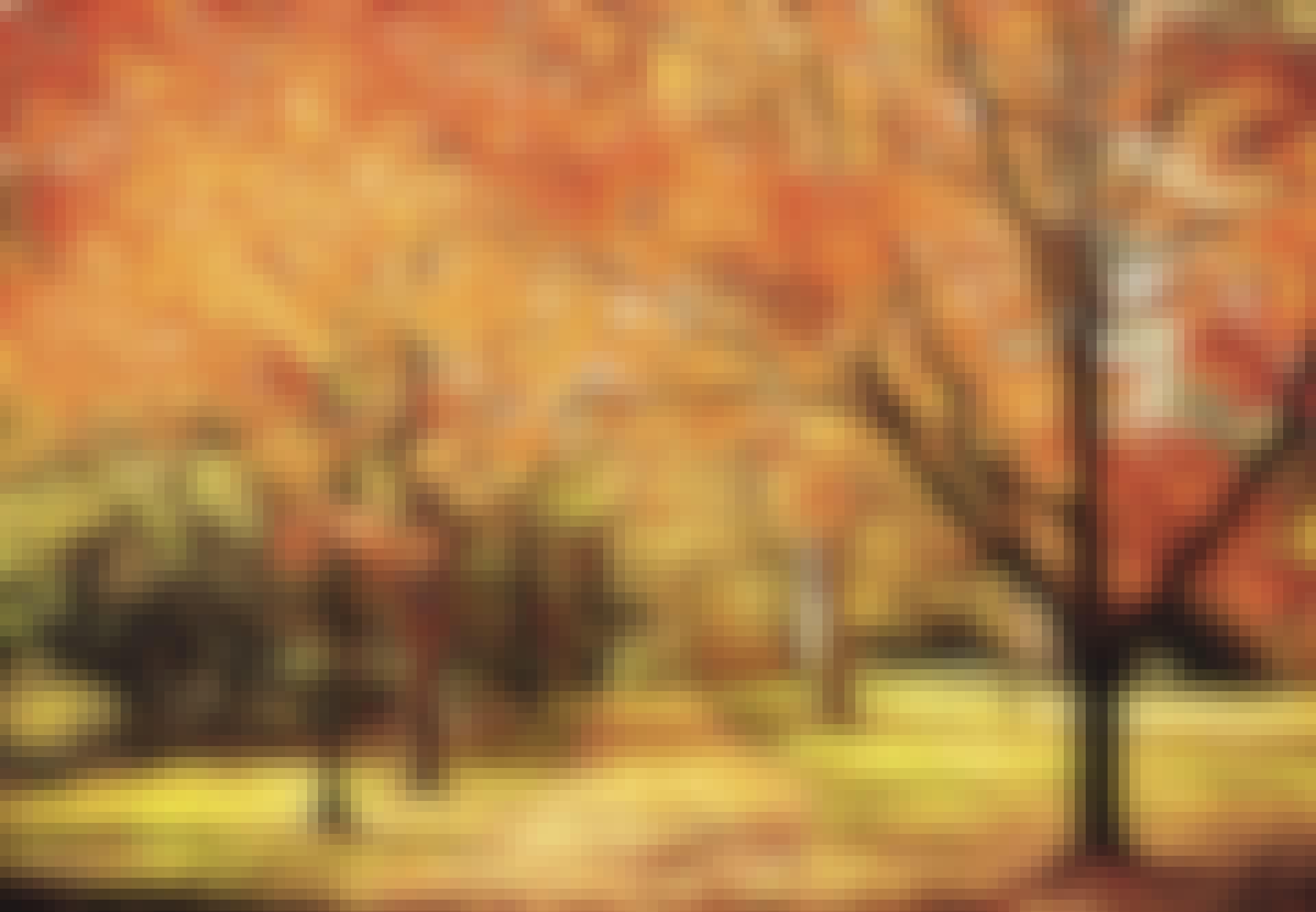 Efterårsjævndøgn - efterårslandskab