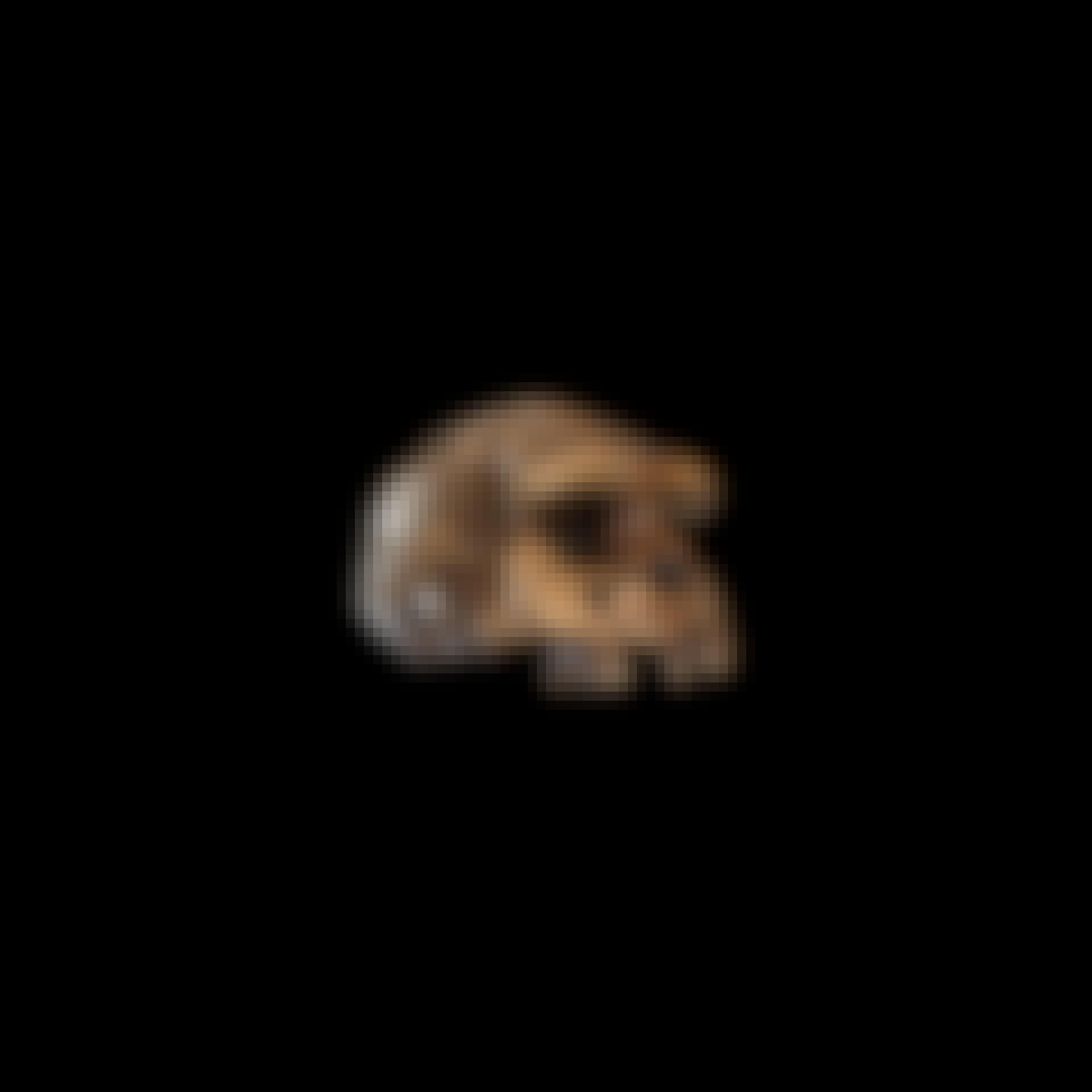 Menneskets udvikling Homo erectus