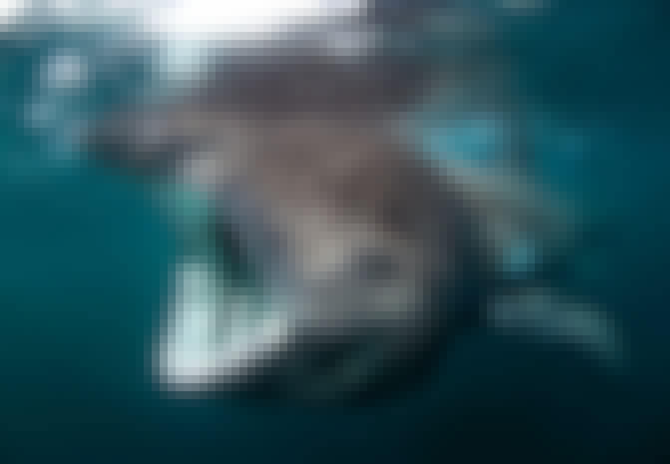 Hajar i Europa - brugd