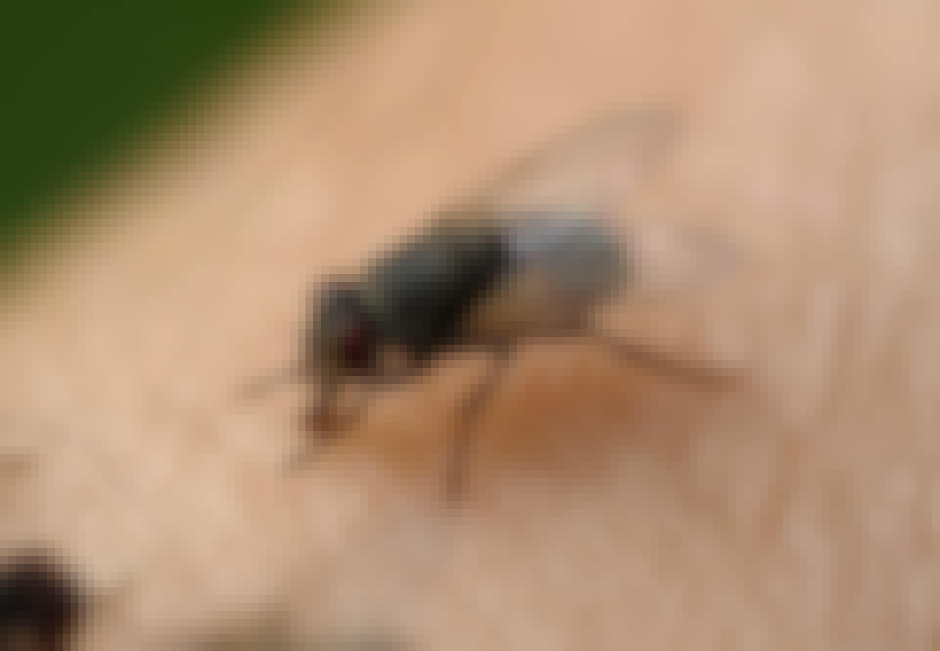 Flue sidder på menneske