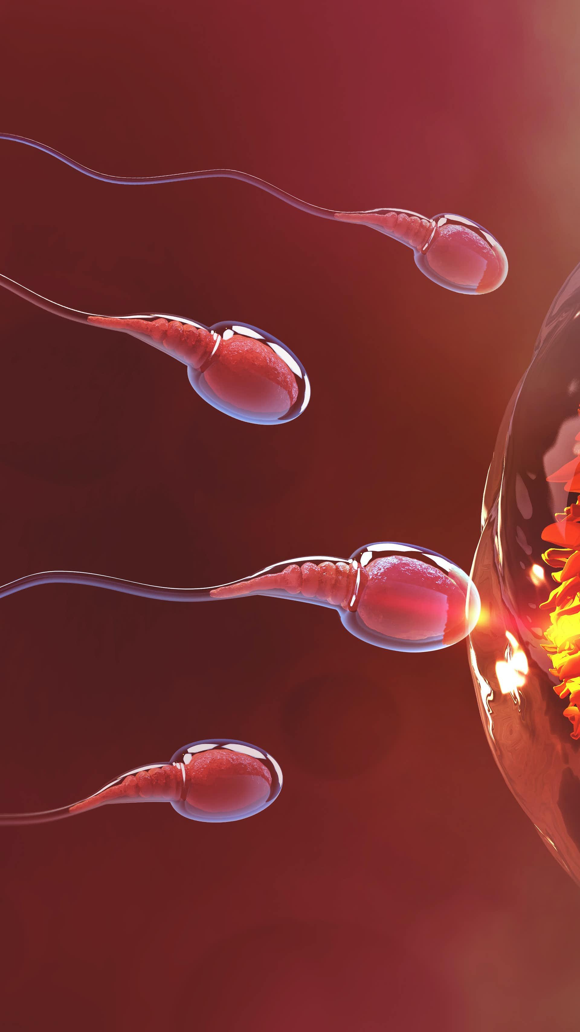 Tjock Sperma