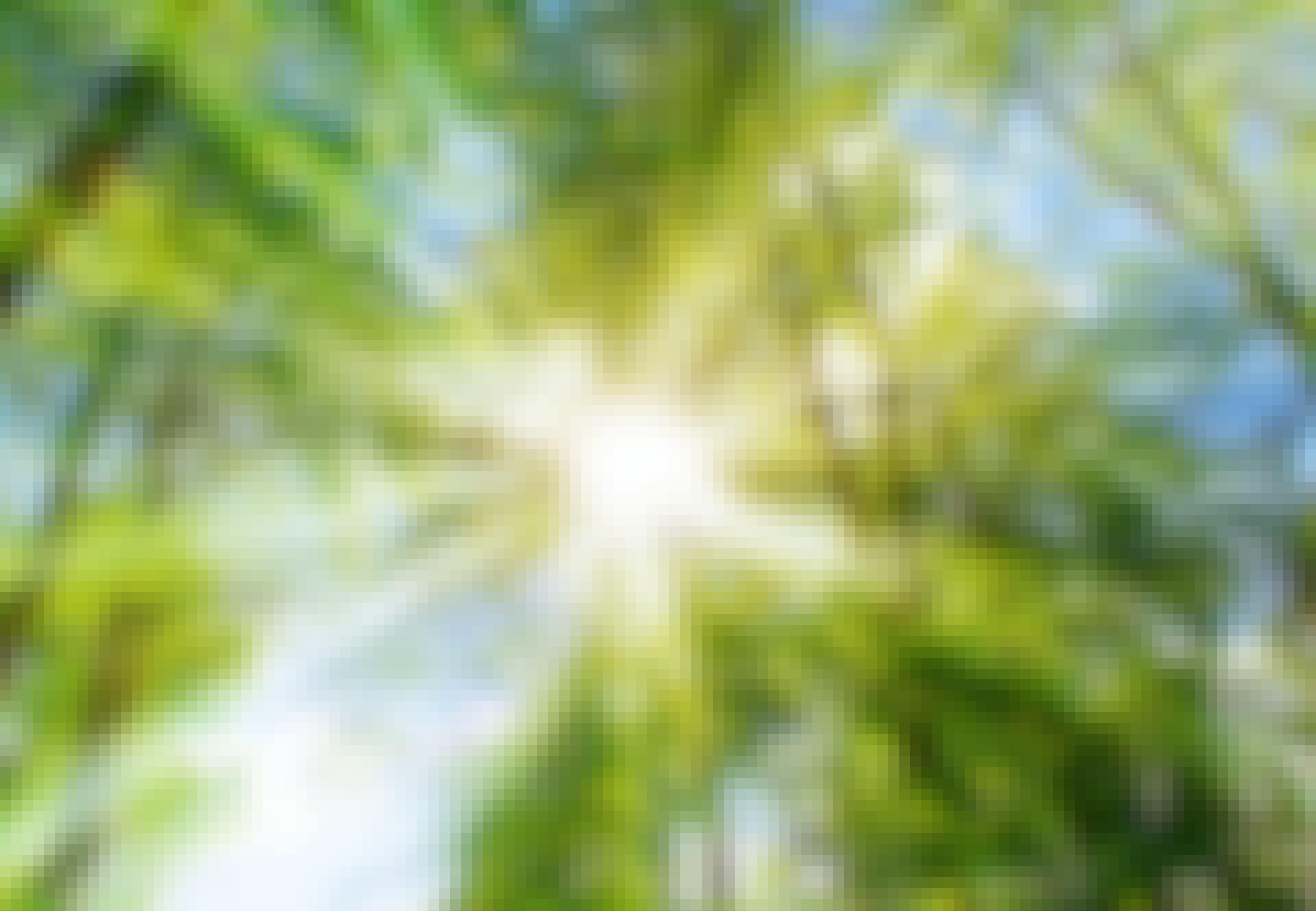 Auringon valo loistaa puiden latvusten välistä
