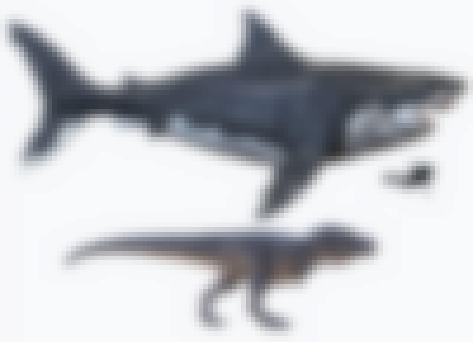Tyrannosaurus rex och det största rovdjuret någonsin