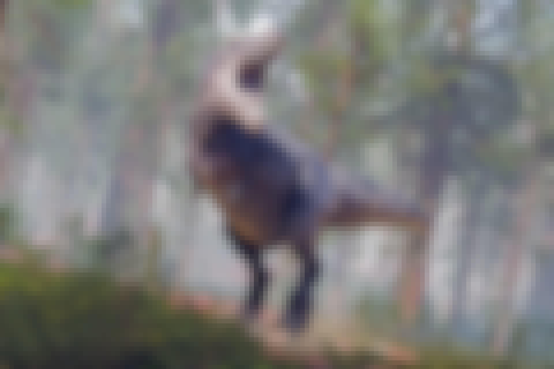 T. rex som brøler i skogen