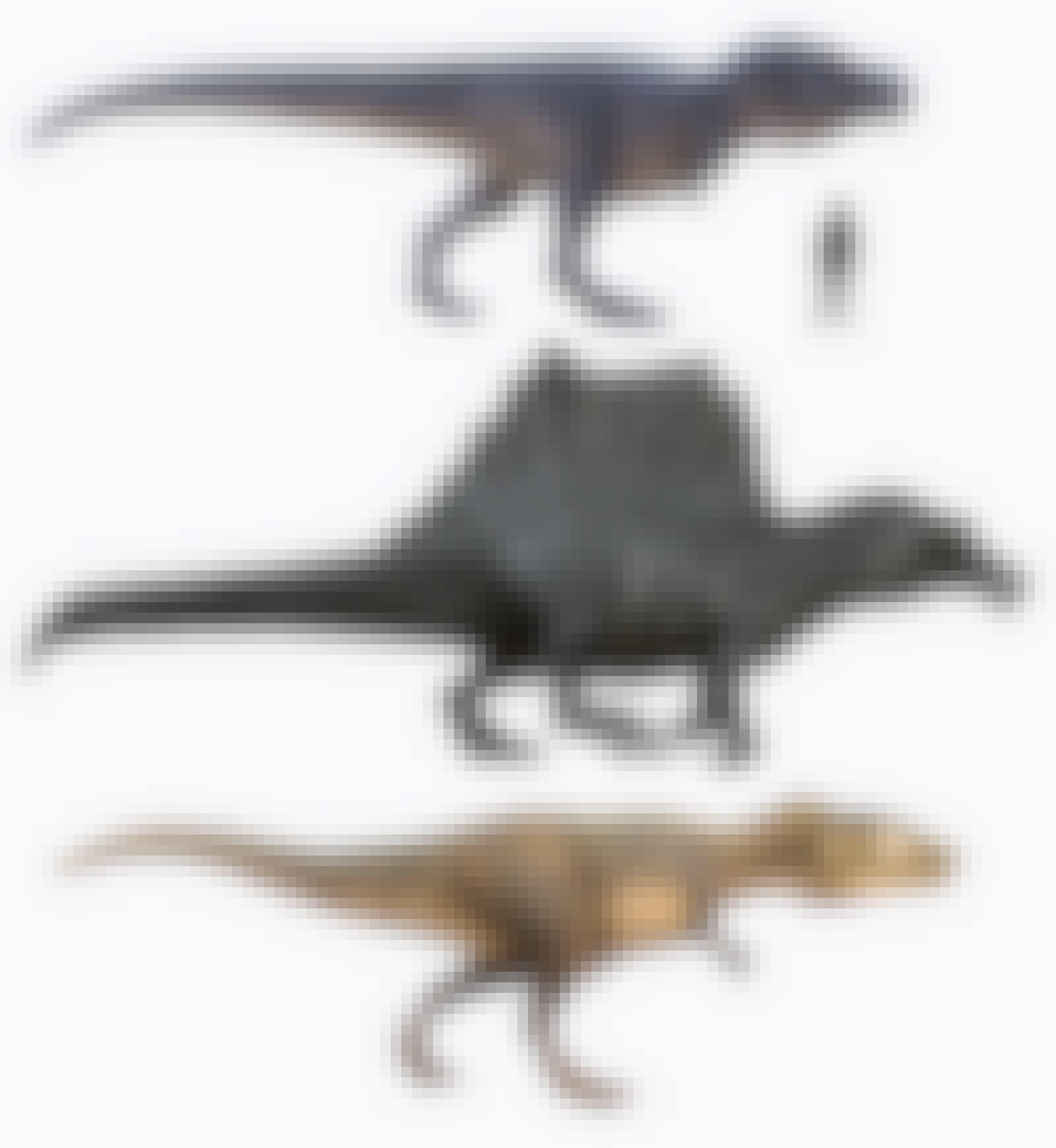 T. rex en andere grote roofdinosauriërs