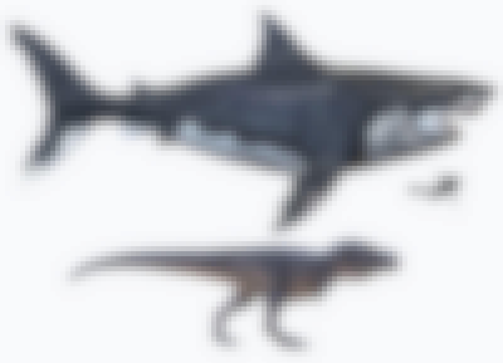 T. rex ja kaikkien aikojen suurin peto