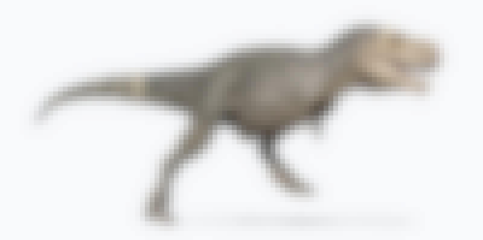 Tyrannosaurus rex juoksee