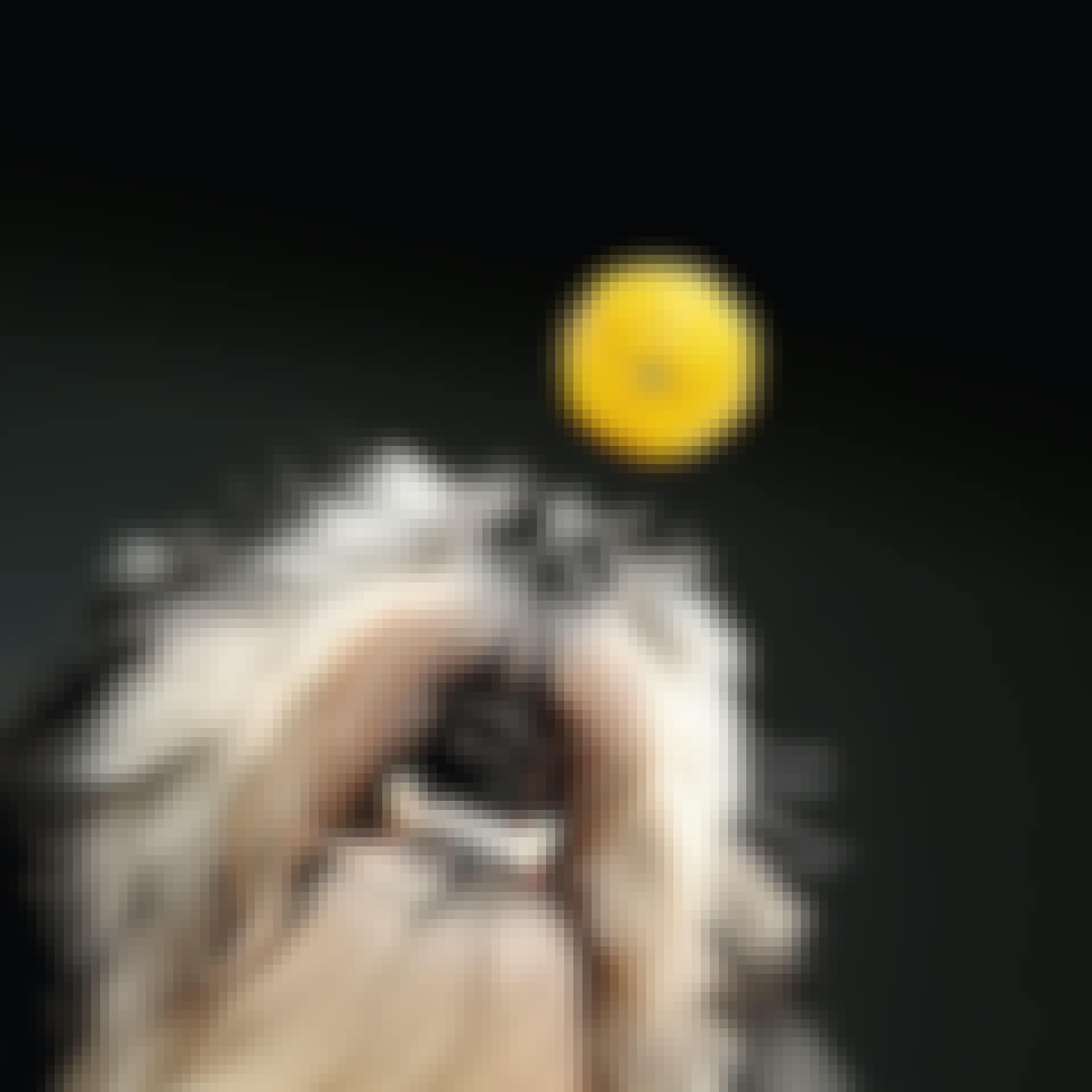 Hundens hjärna är stor som en citron
