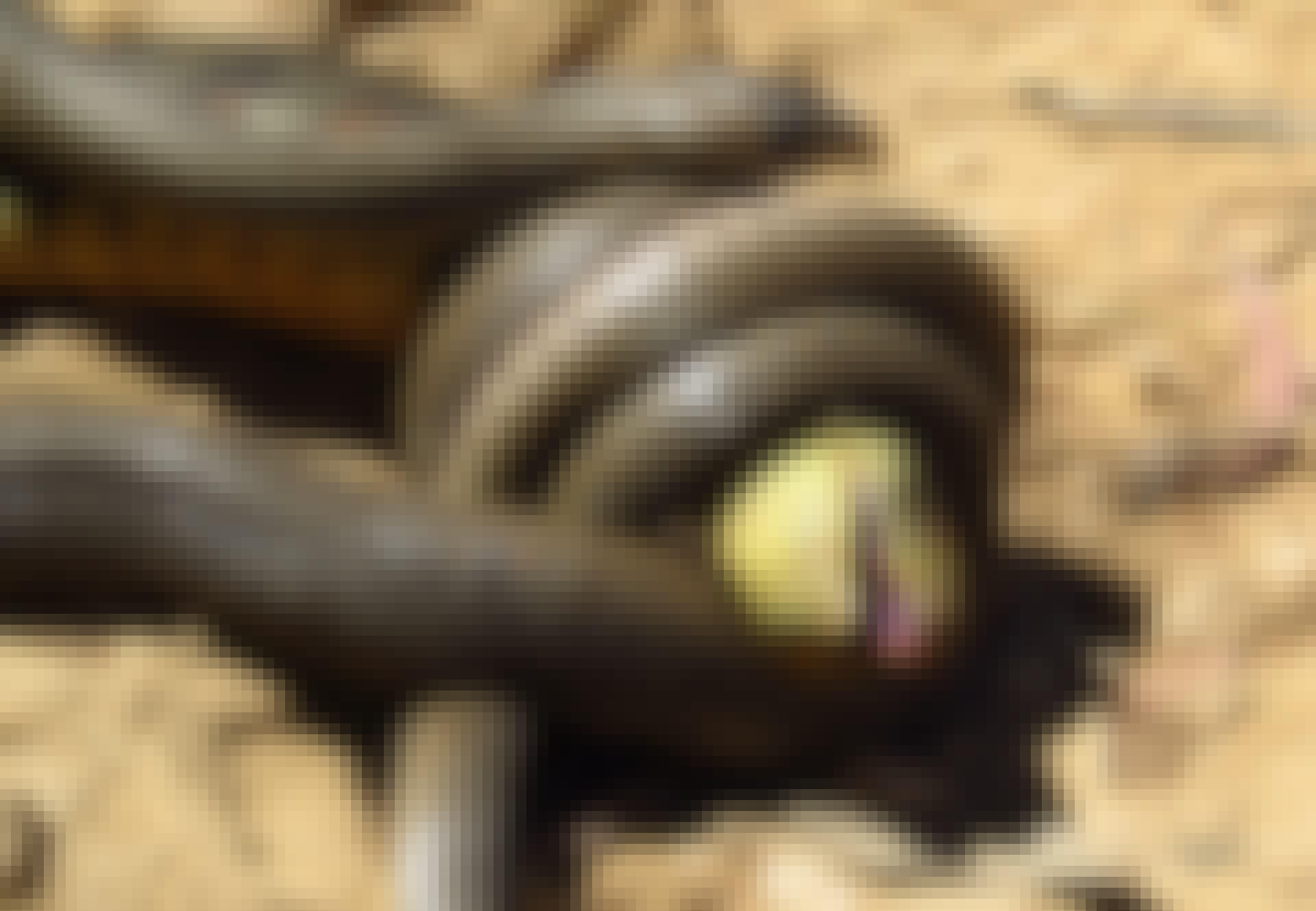Den brune giftslangen fraAustralia