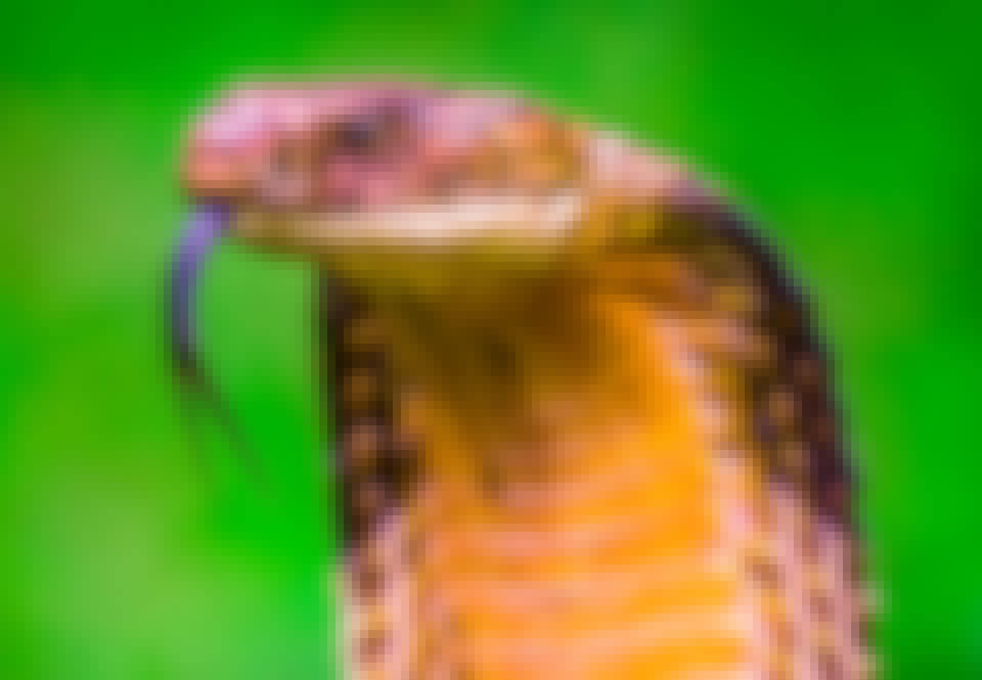 Slangen er et af verdens farligste dyr