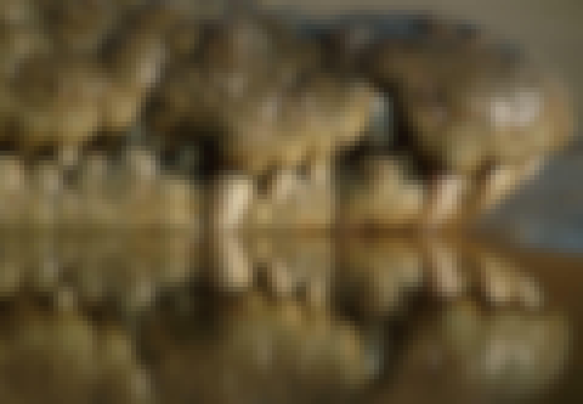 Krokodilen har superkänsliga sensorer