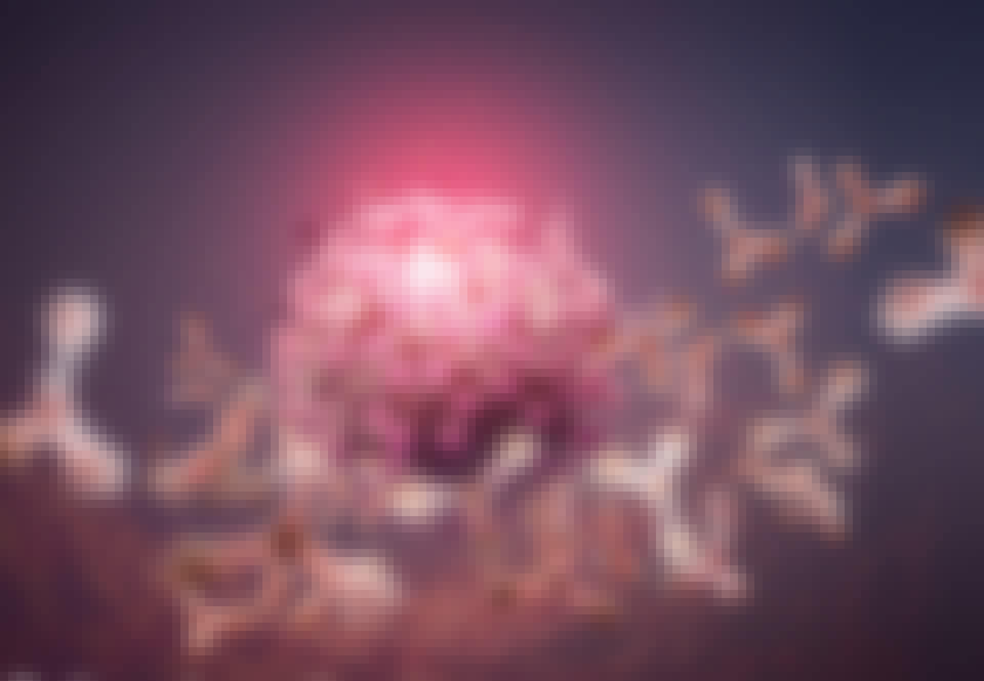 Antistoffen vallen een coronavirusdeeltje aan