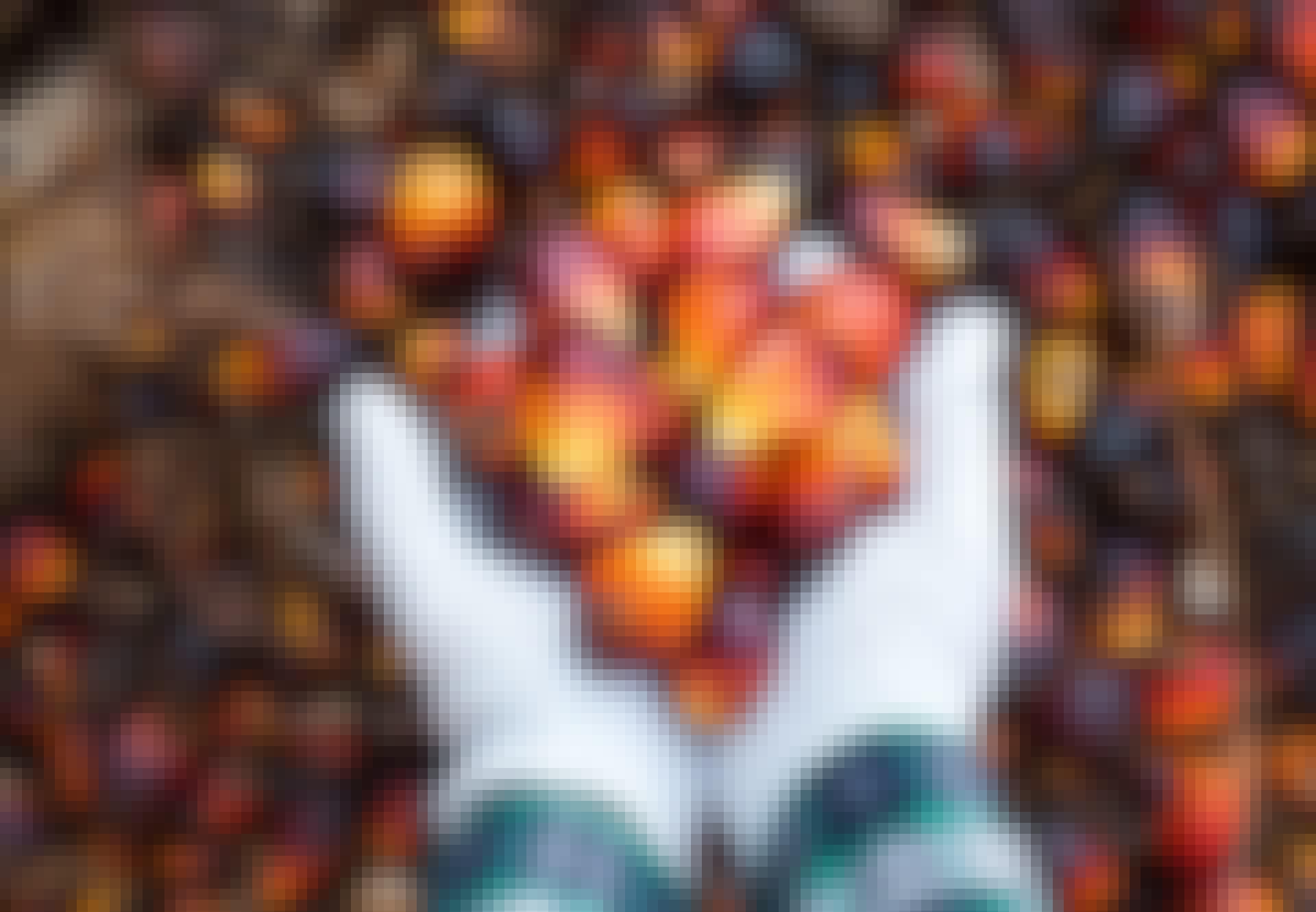 Öljypalmun hedelmiä