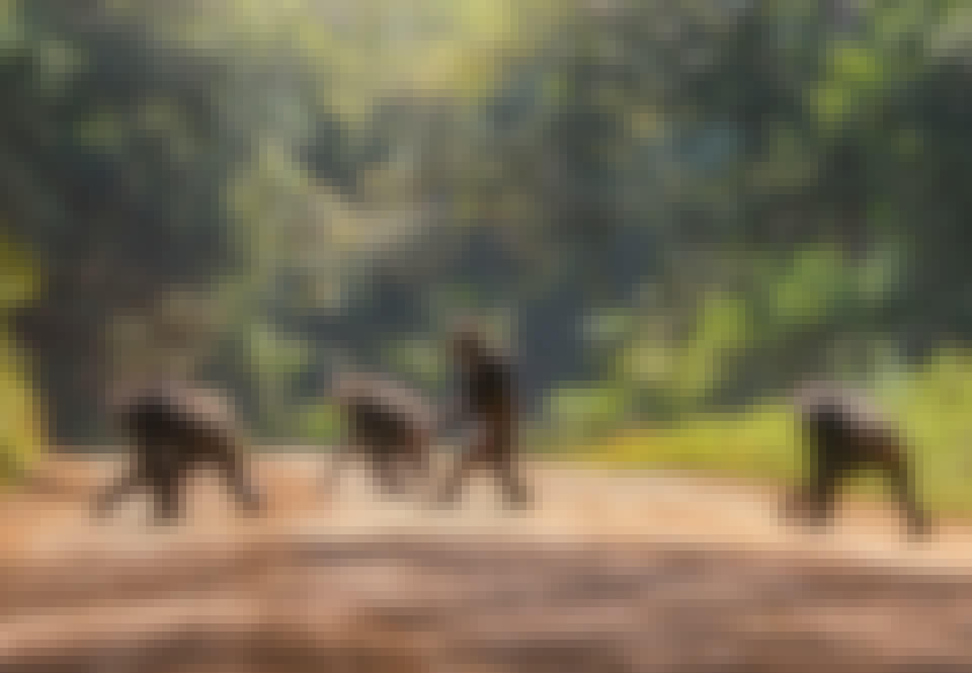 apor, gående, väg