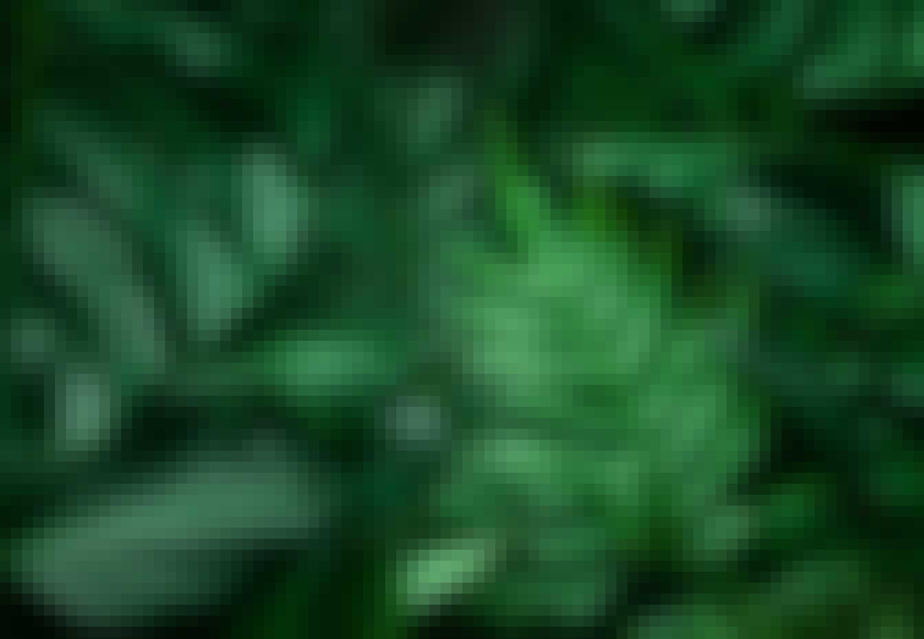 Nærbilde av ulike planter