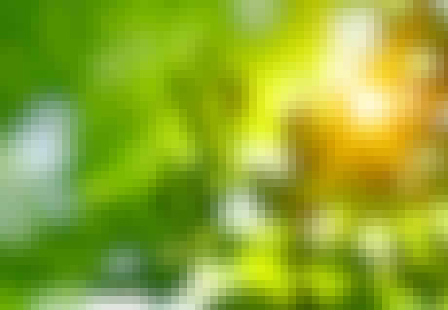 Lehti kylpee auringonvalossa
